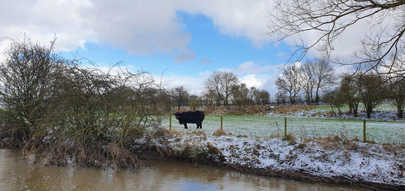 A murky brown river in the foreground, with a partially snow-covered bank and a black cow standing in a field behind.
